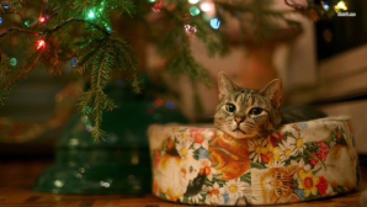 12691-cat-under-christmas-tree-1366x768-animal-wallpaper
